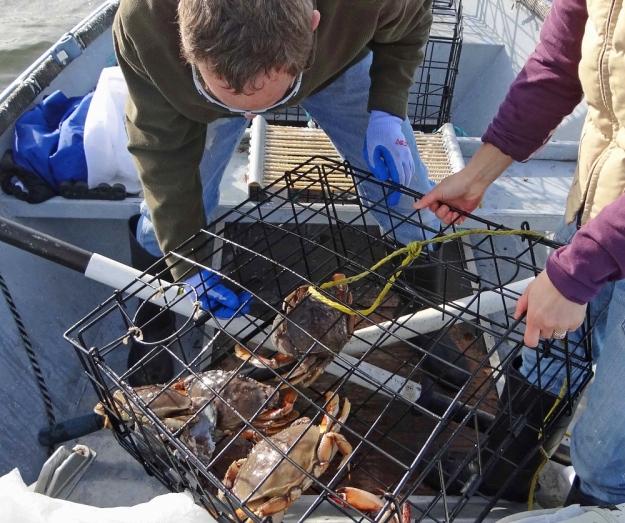 crabbing3